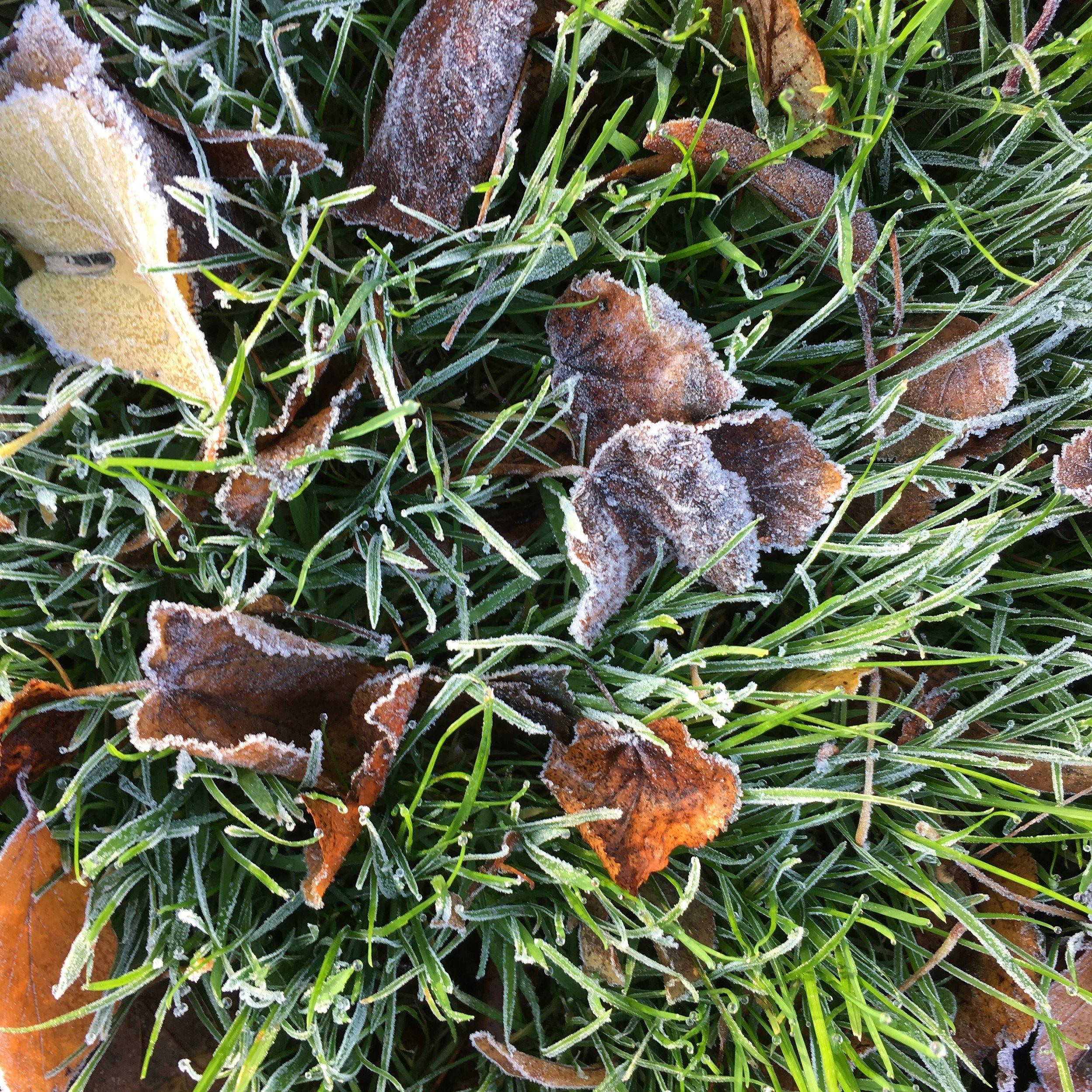 Frozen grass in the first weekend of November