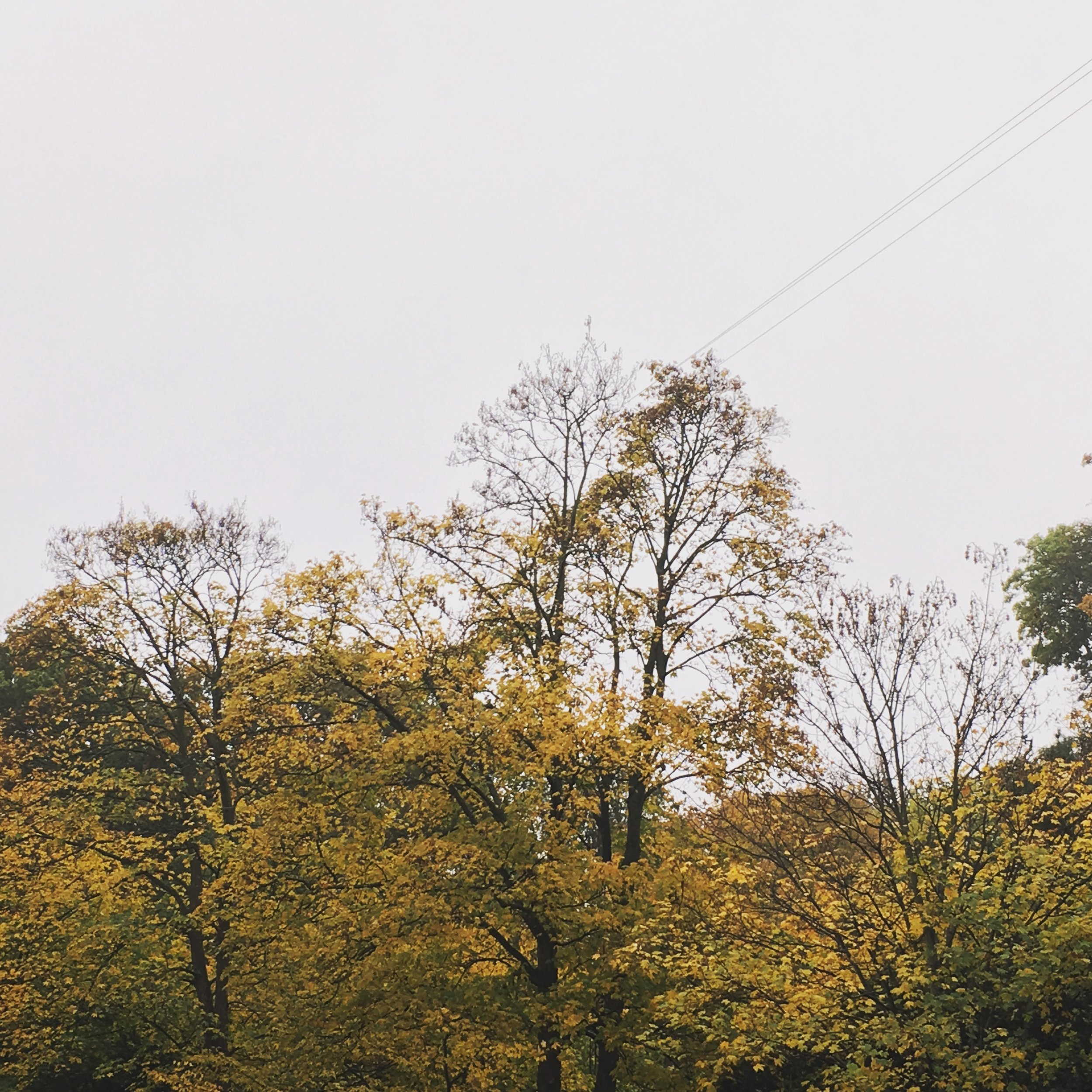 The very yellow trees after my doctors appointment. My back was completely screwed at this time.