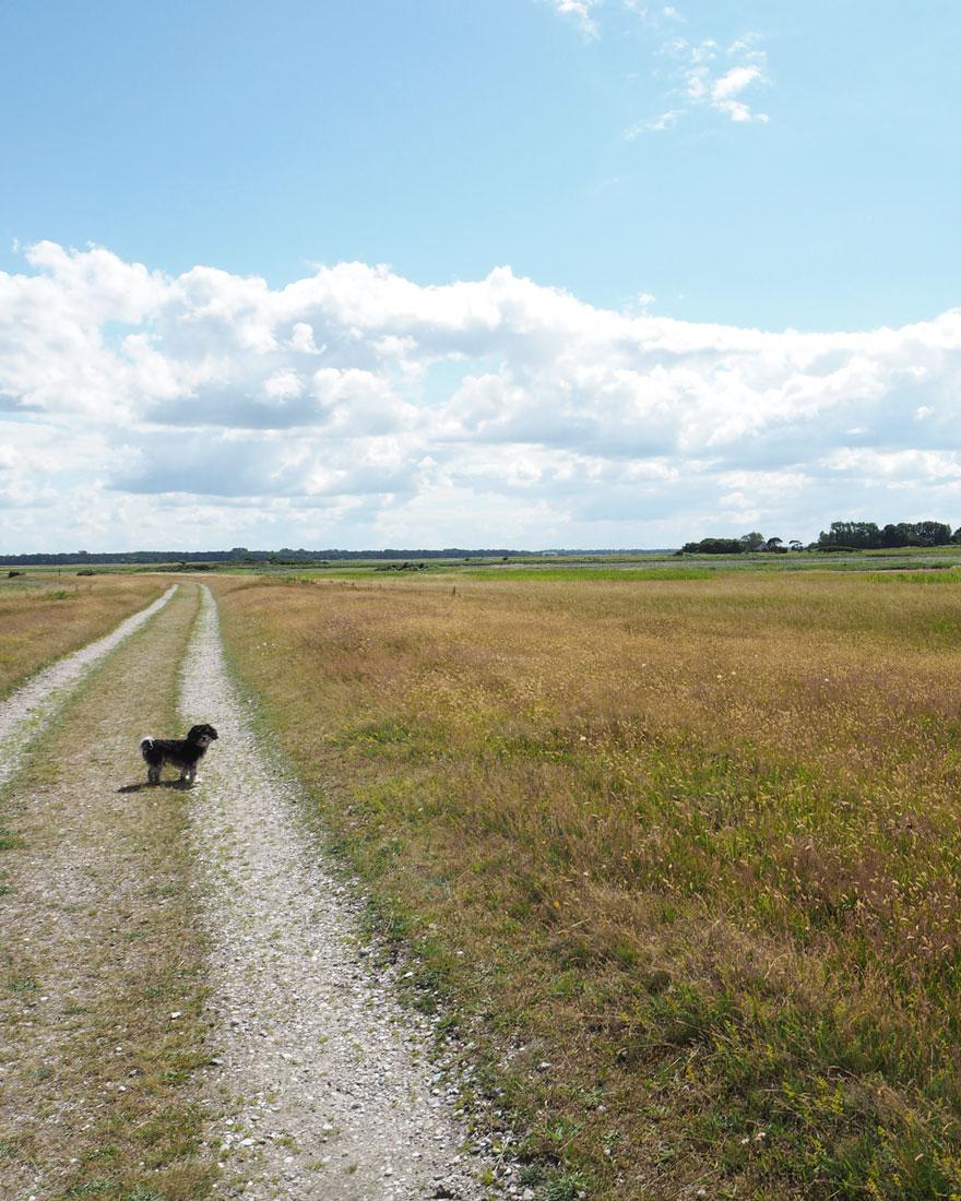 Summer stories by silke Bonde