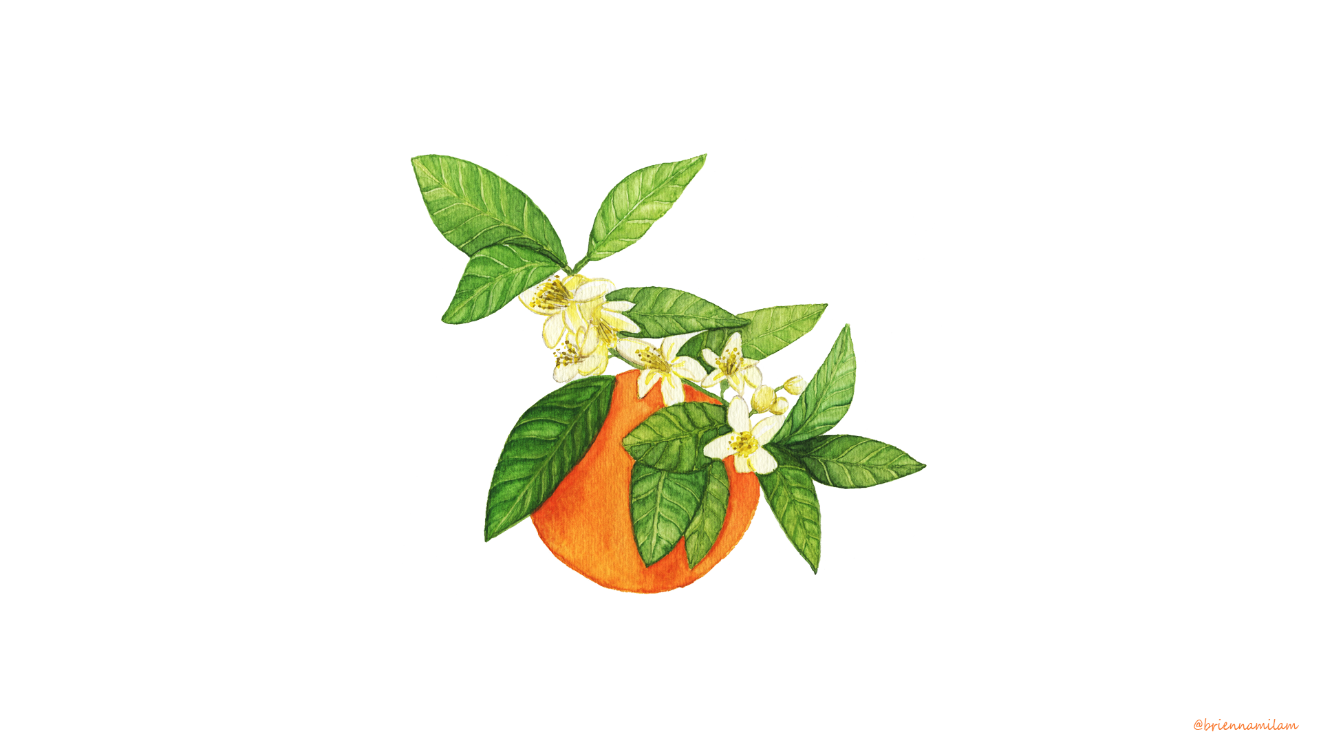 Orange Blossom -