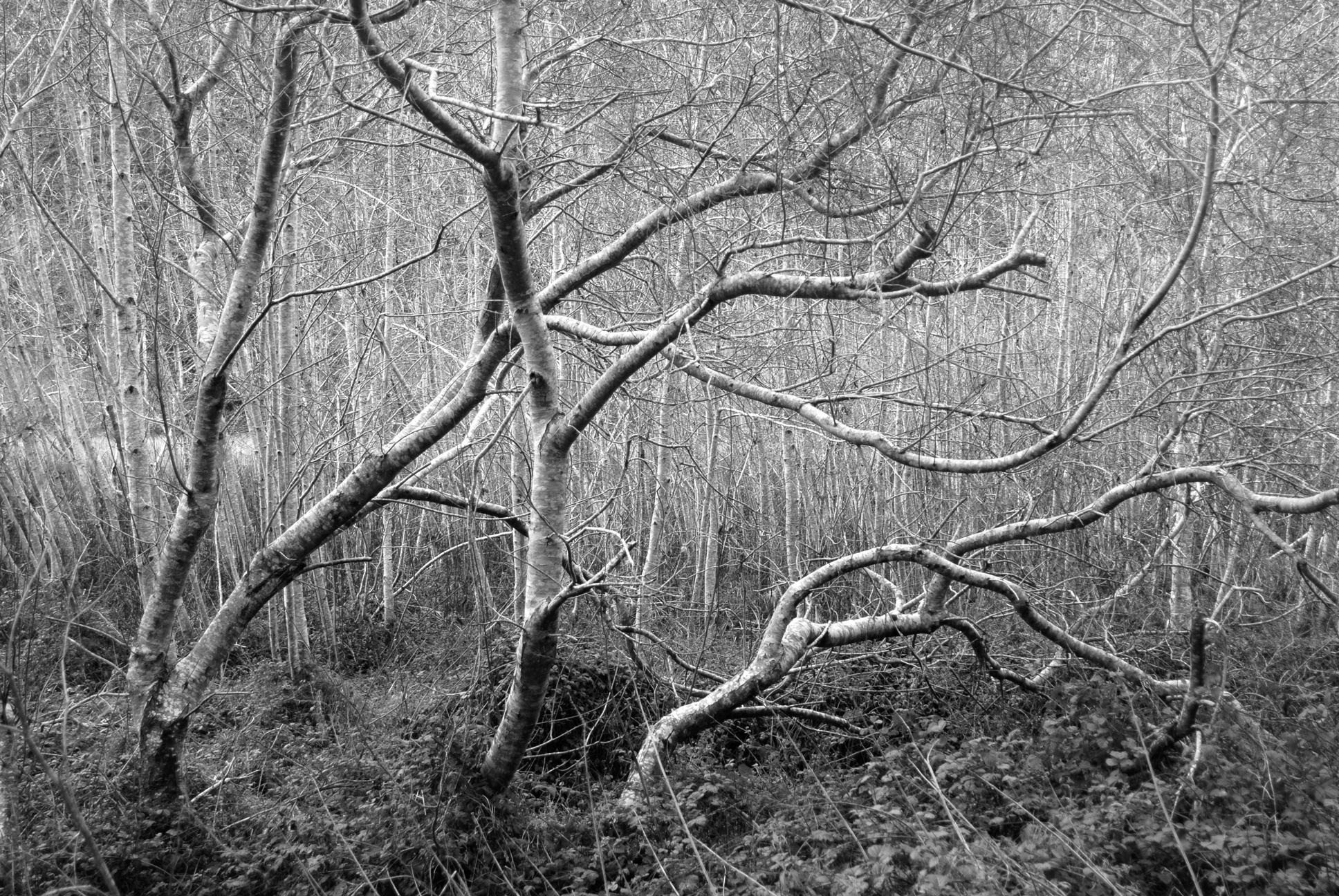 treeform.png