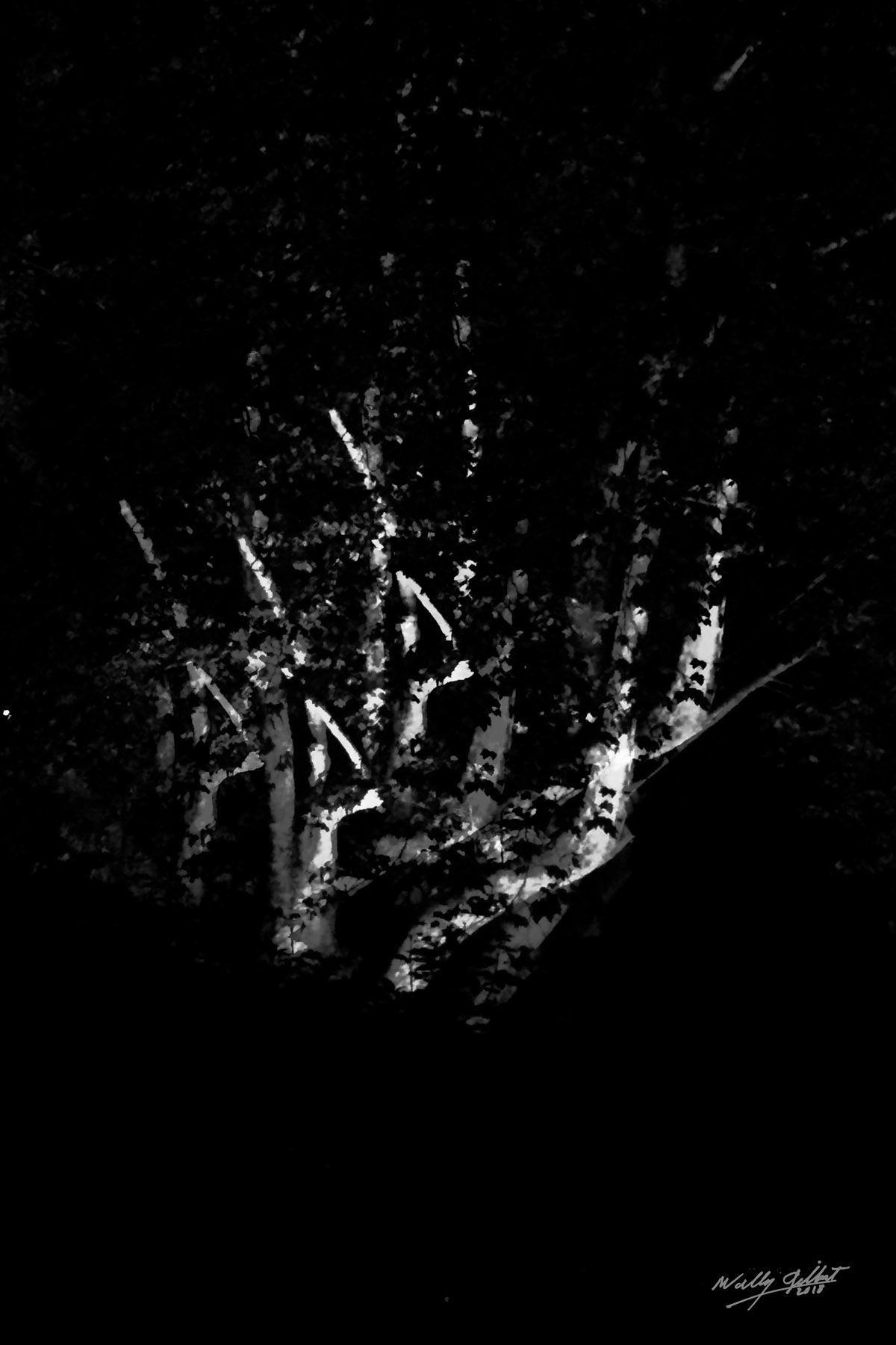"""Night Trees – Black and White"" 30"" x 20"", 2016, Print on Aluminum, 1/5                $1000."