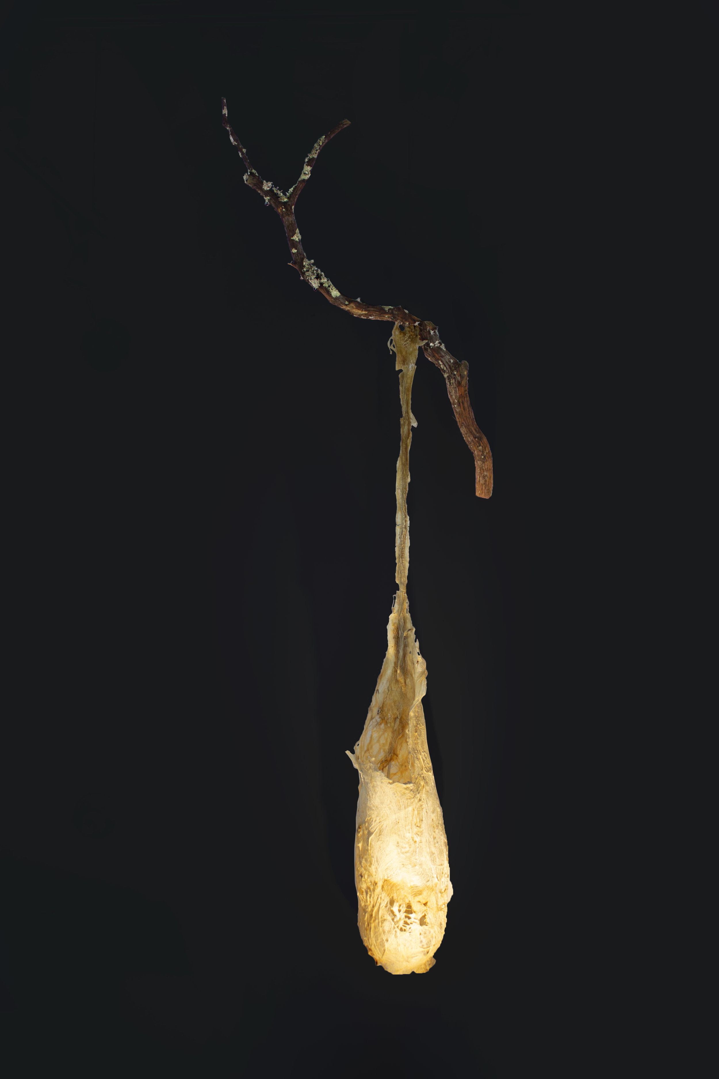 """COCOON I, 2017, CAMBIUM FIBER FROM ASIAN MULBERRY TREE, BRACH, AND LED LIGHT, 75""""H x 27""""W x 10""""D, $1450"""
