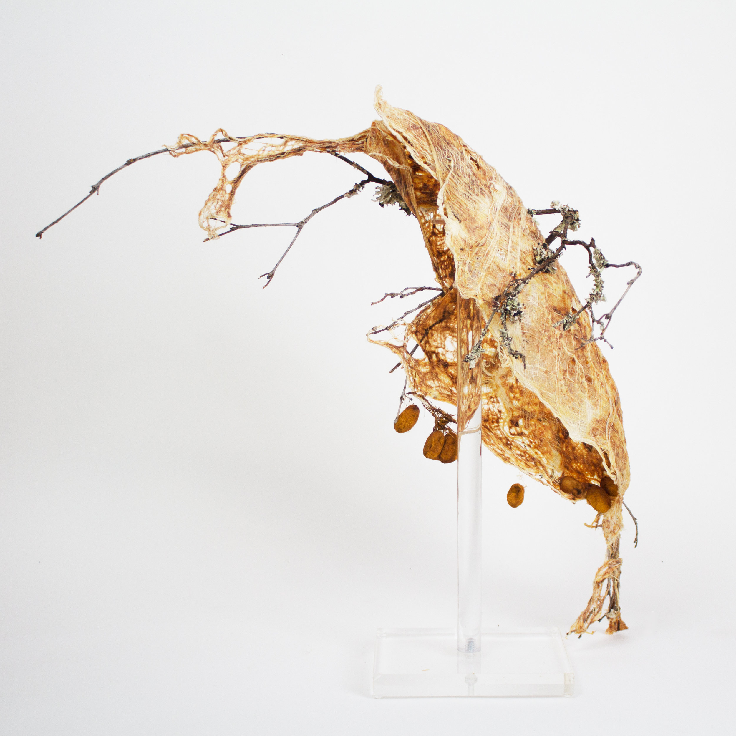 """RELEASED, 2016, CAMBIUM FIBER FROM ASIAN MULBERRY TREE AND BRANCH, 27""""H x 25""""W x 24""""D, Not For Sale"""