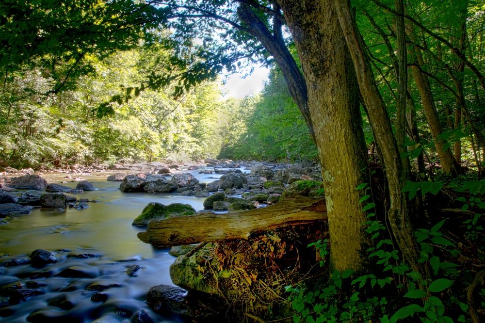 rockstrewn stream sunlit water trees silky.jpg