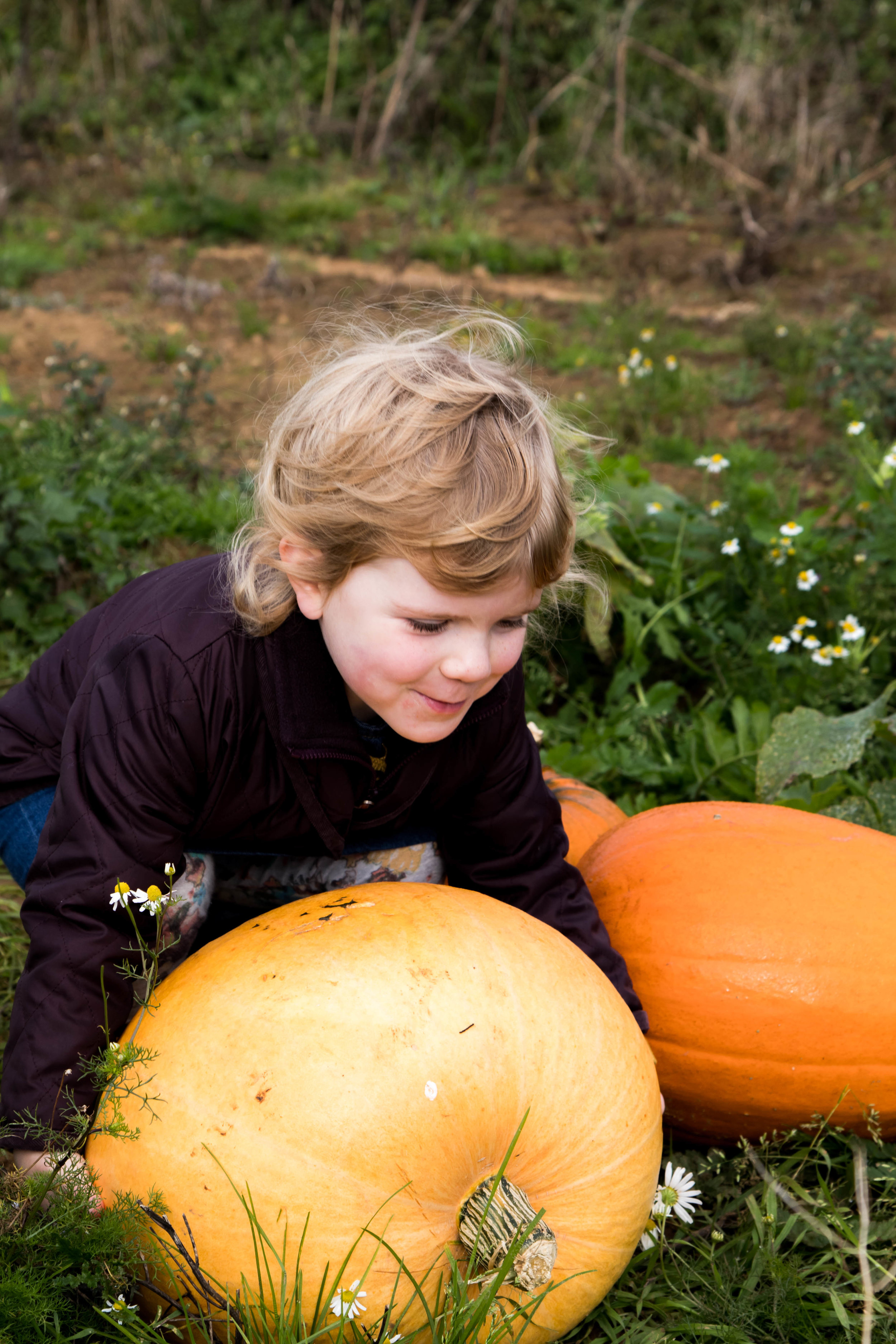 Pumpking Patch - Shannon Hammond Photography-6.jpg