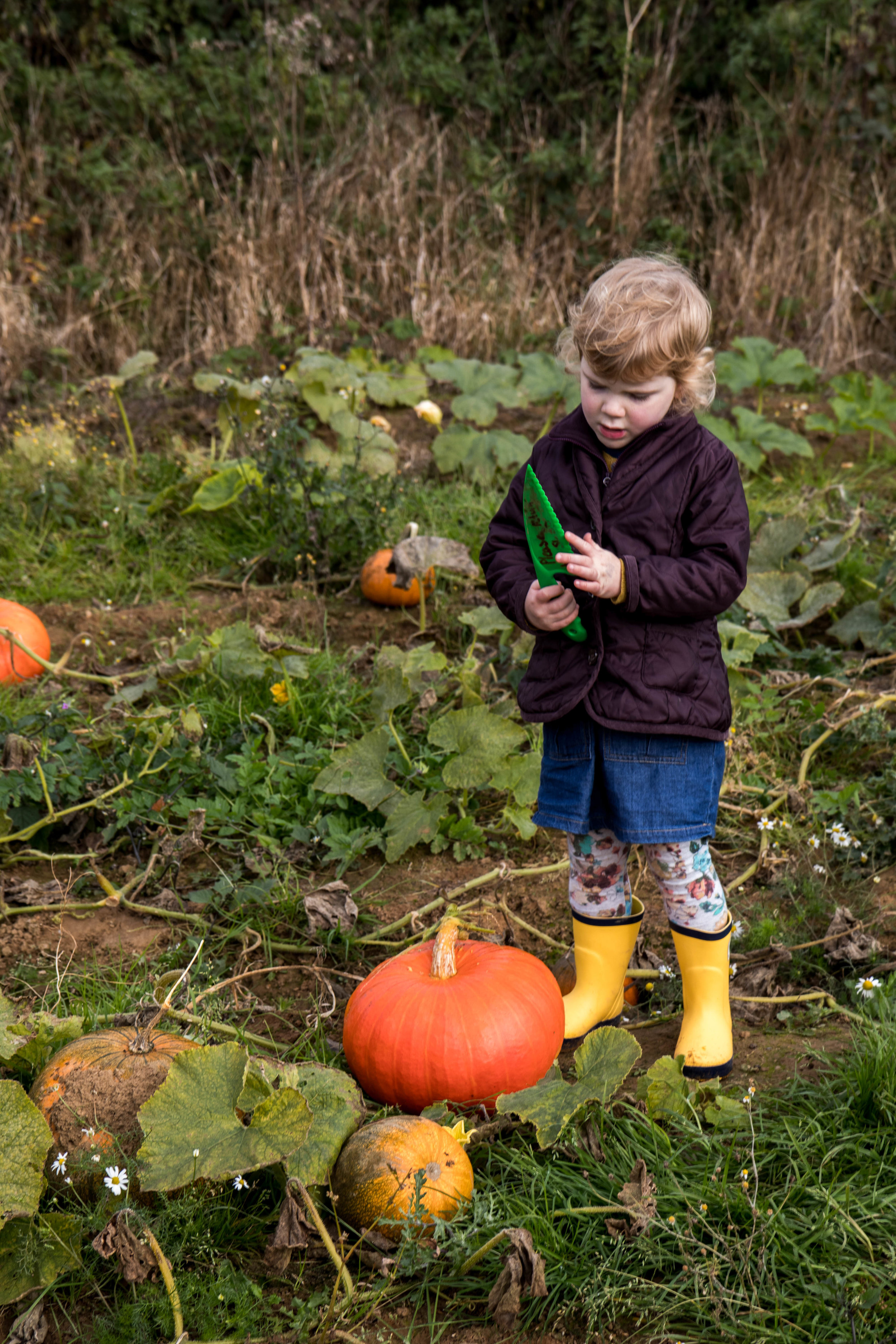 Pumpking Patch - Shannon Hammond Photography-11.jpg
