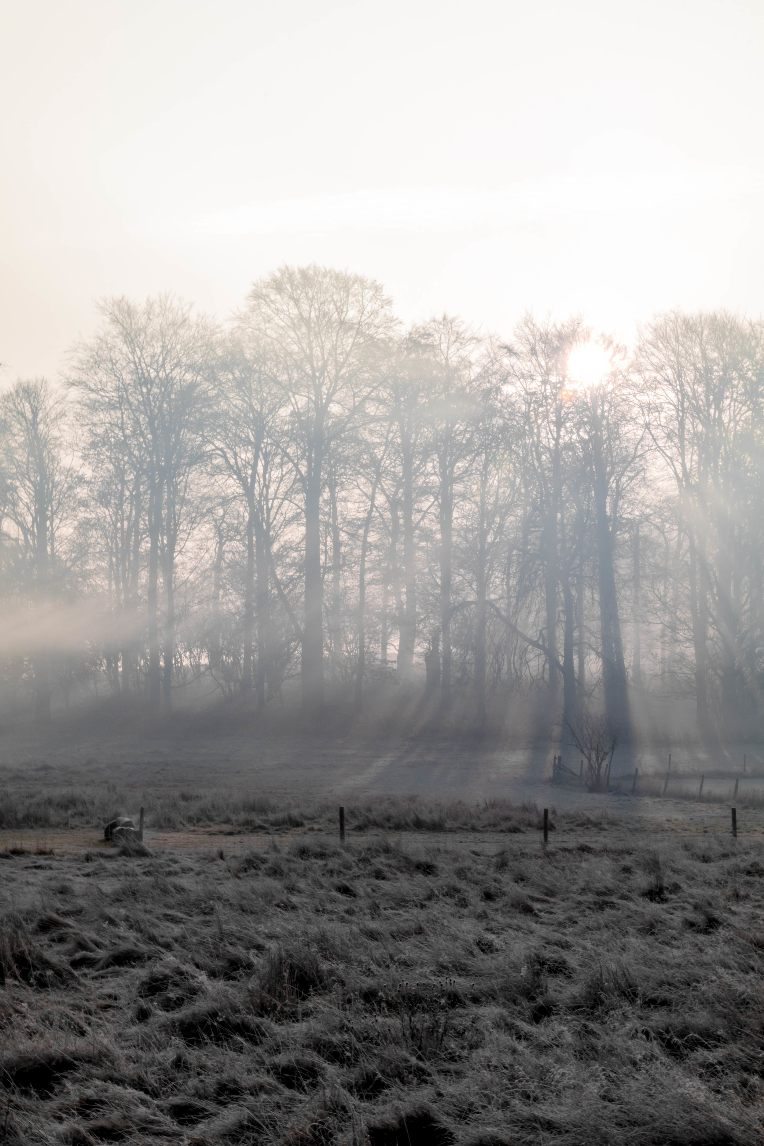 Misty Winter Mornings - Shannon Hammond Photography-7.jpg