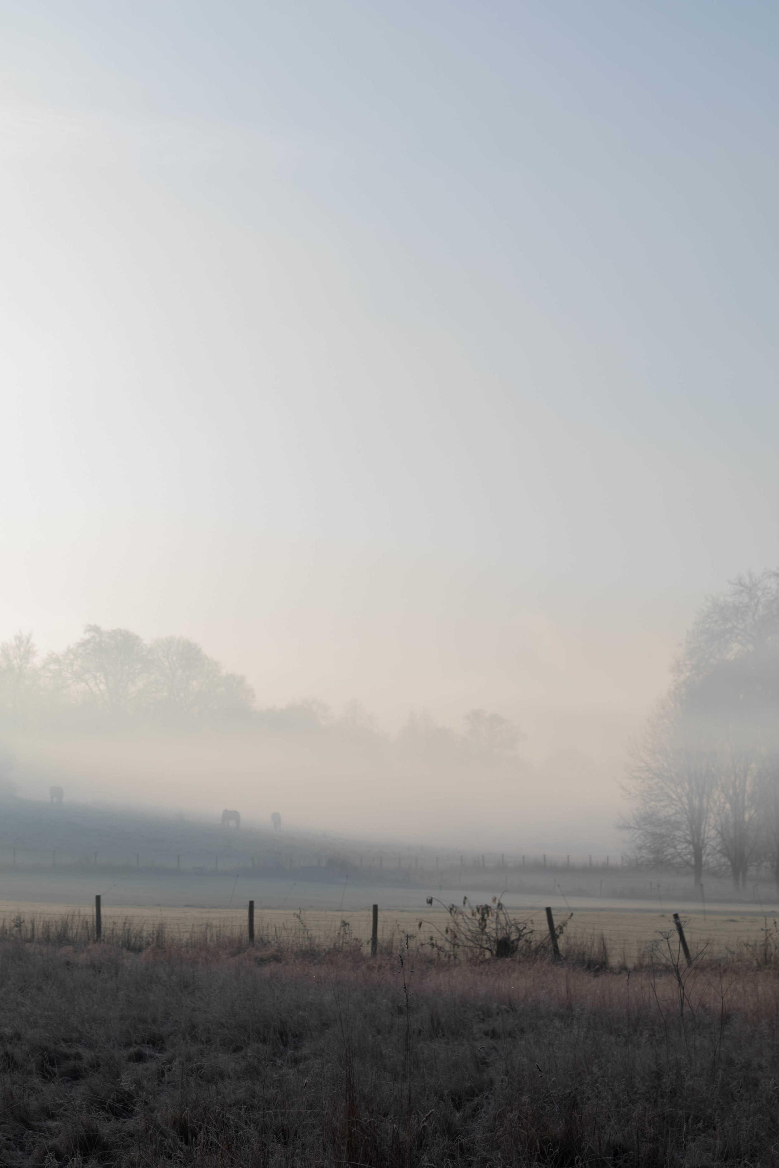 Misty Winter Mornings - Shannon Hammond Photography-9.jpg
