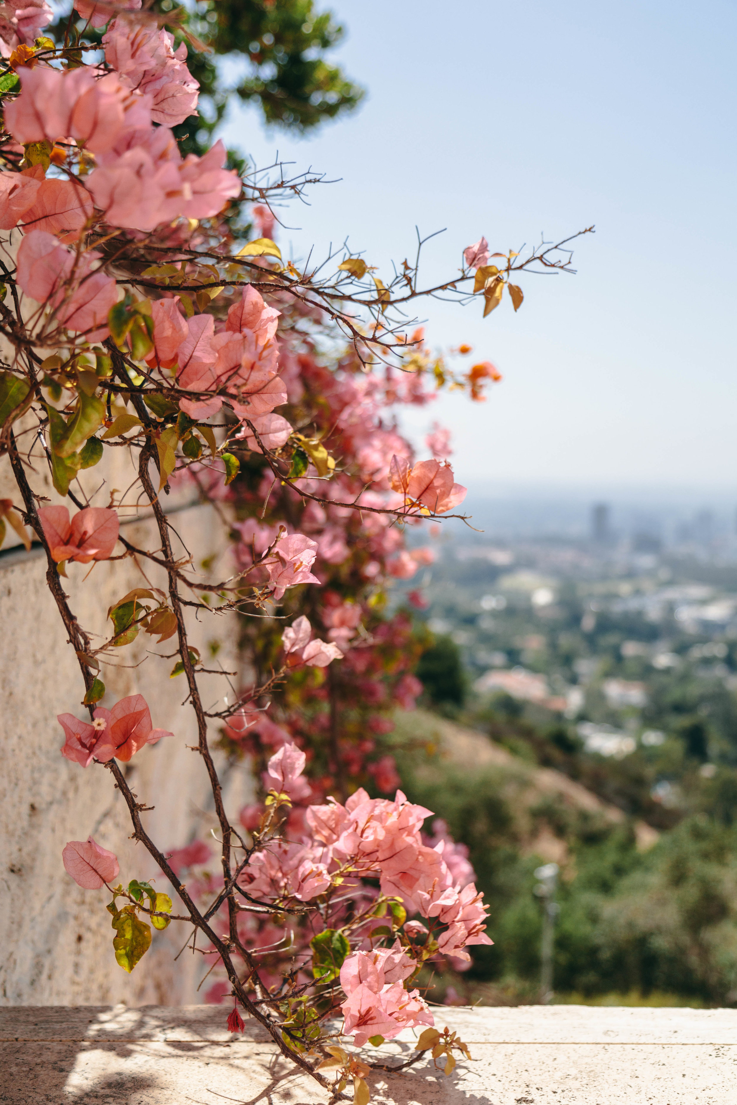 Shannon Hammond Photography - Los Angeles -1153.jpg
