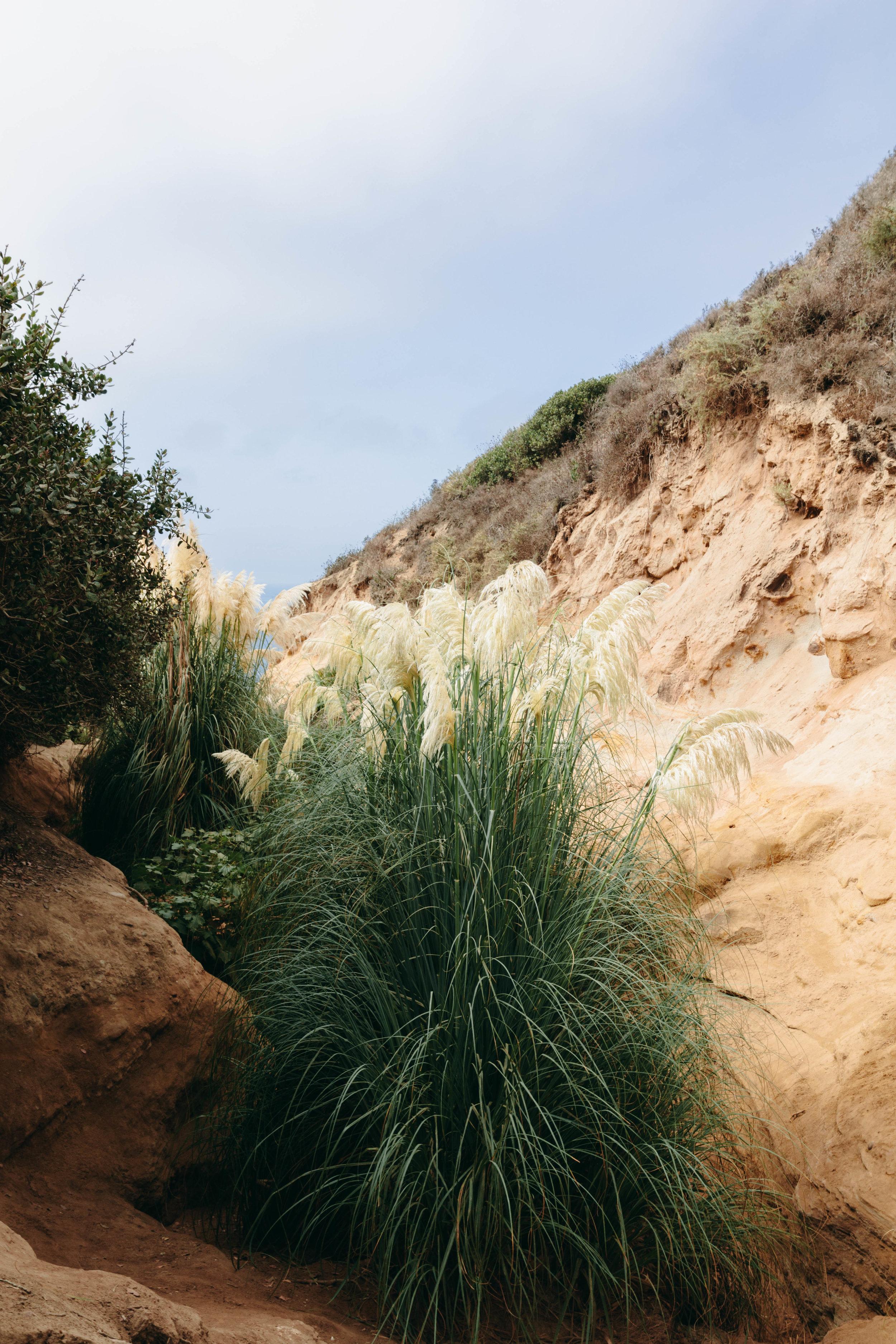 San Diego Hikes - Shannon Hammond Photography-6.jpg