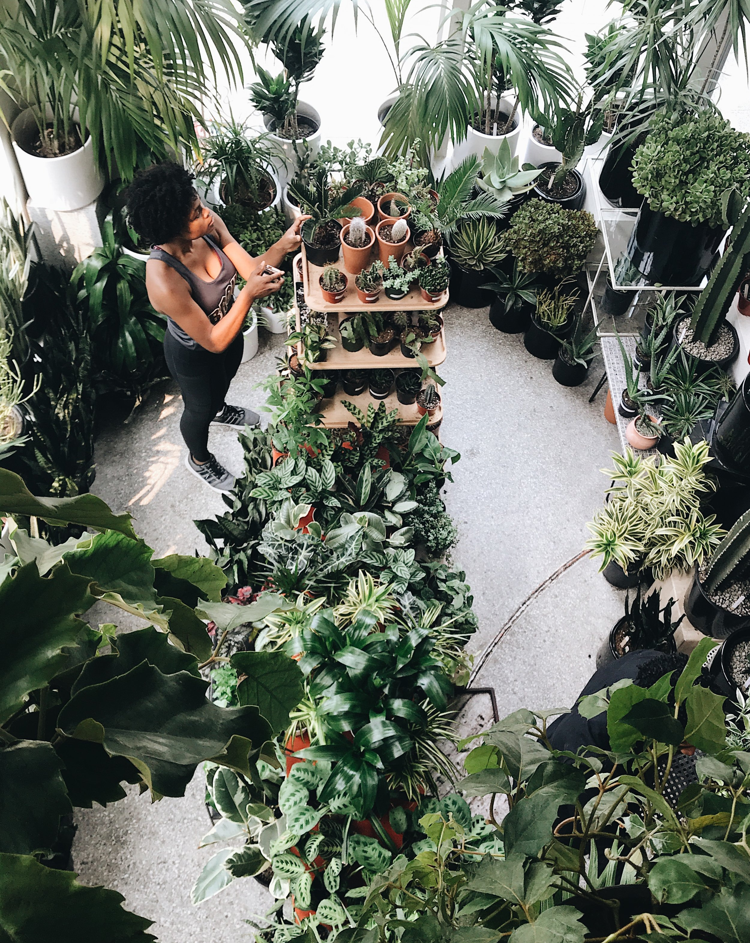The Plant Shop Seattle 1.JPG