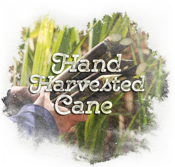espirito cachaca green hand harvested sugarcane natural cane field
