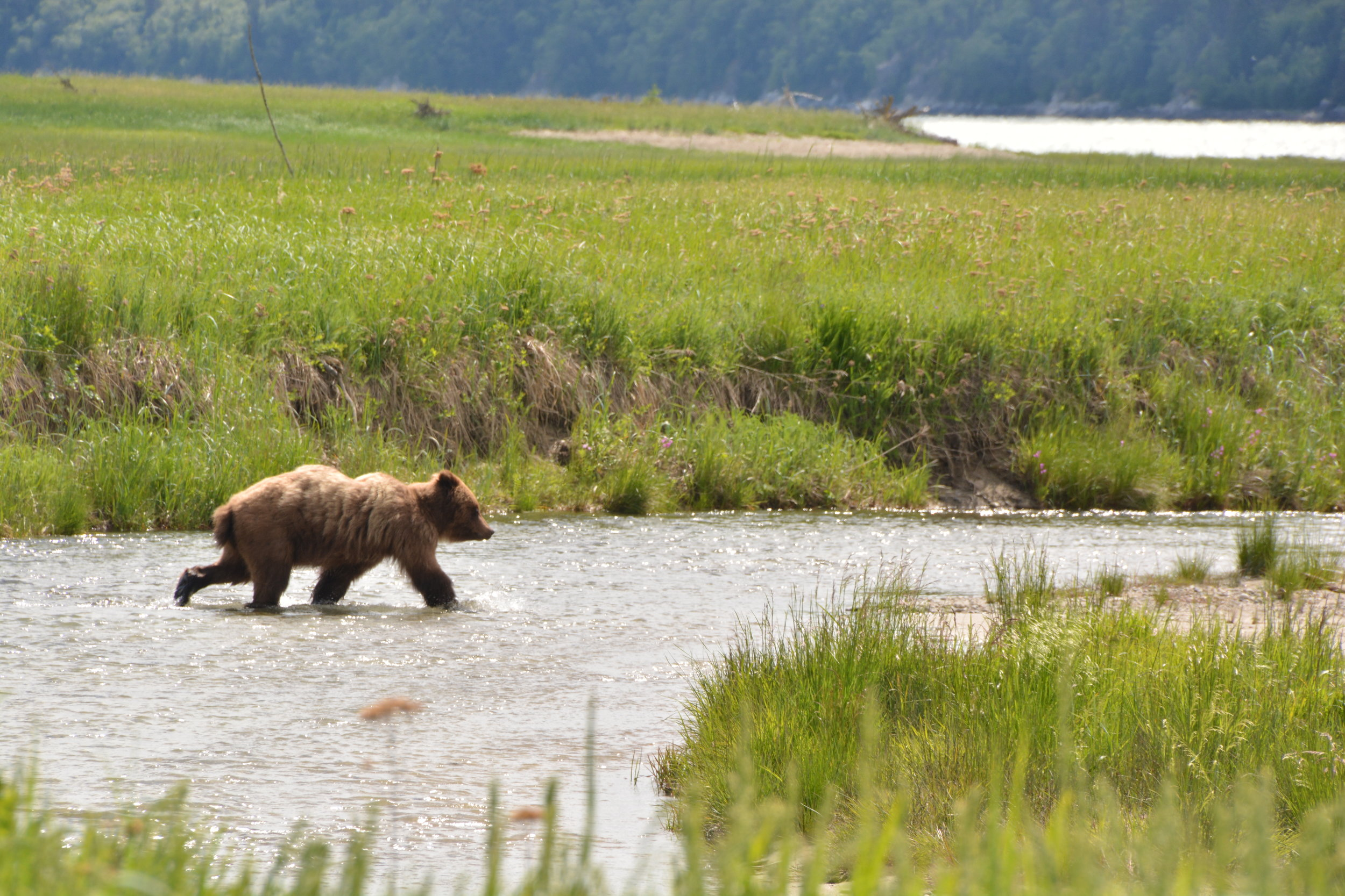 Wildlife & White Pass Tour - Skagway, Alaska
