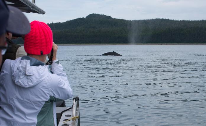 Whale Watching - Hoonah, Alaska