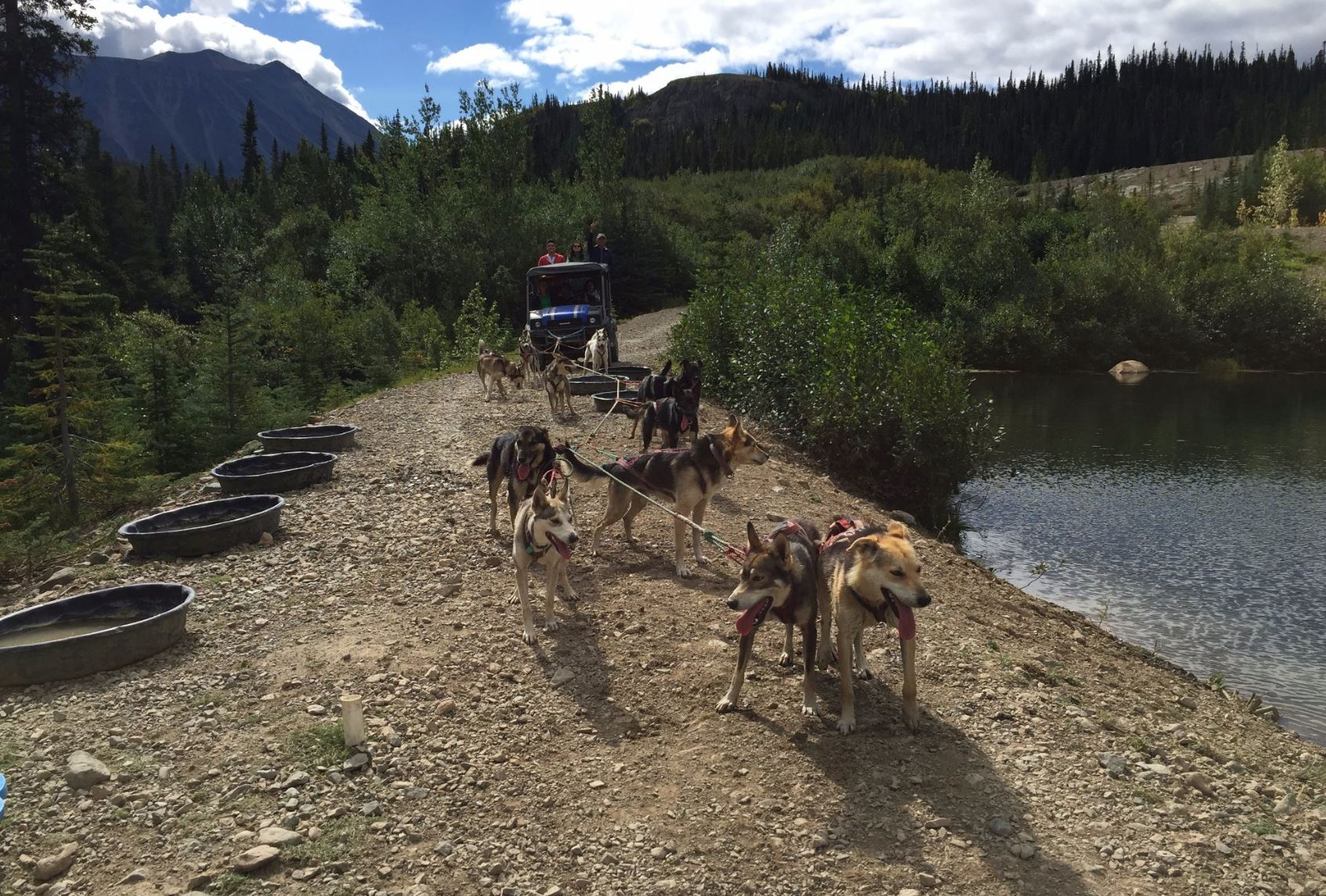 Yukon Dog Sledding Tour - Skagway, Alaska