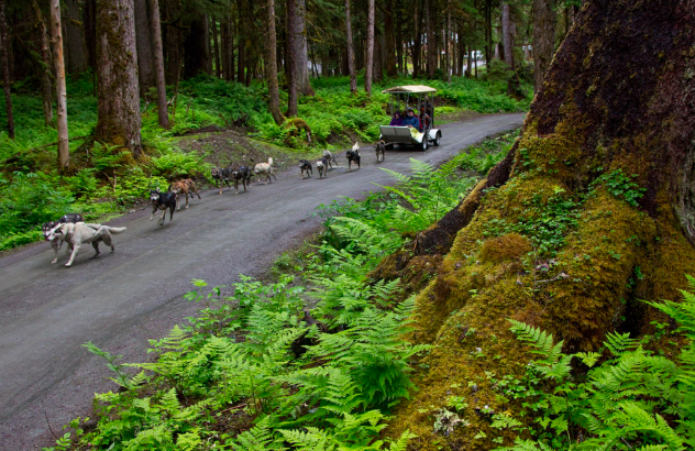 Dog Mushing - Juneau, Alaska