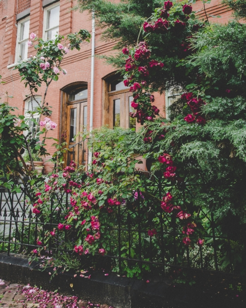 brick rowhouse with roses