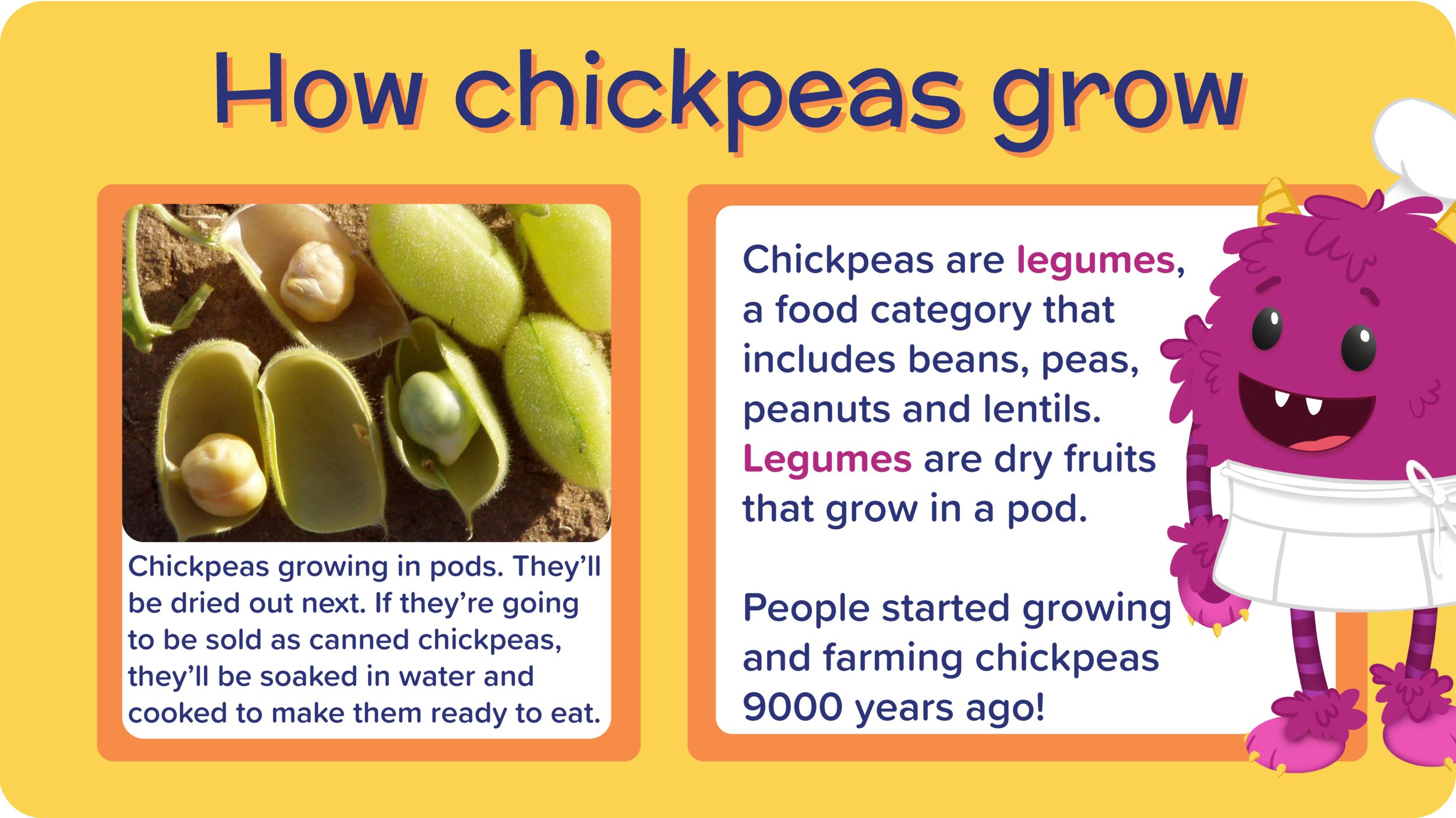 15_FalafelPocketsZingyTzatziki_how chickpeas grow-01.png