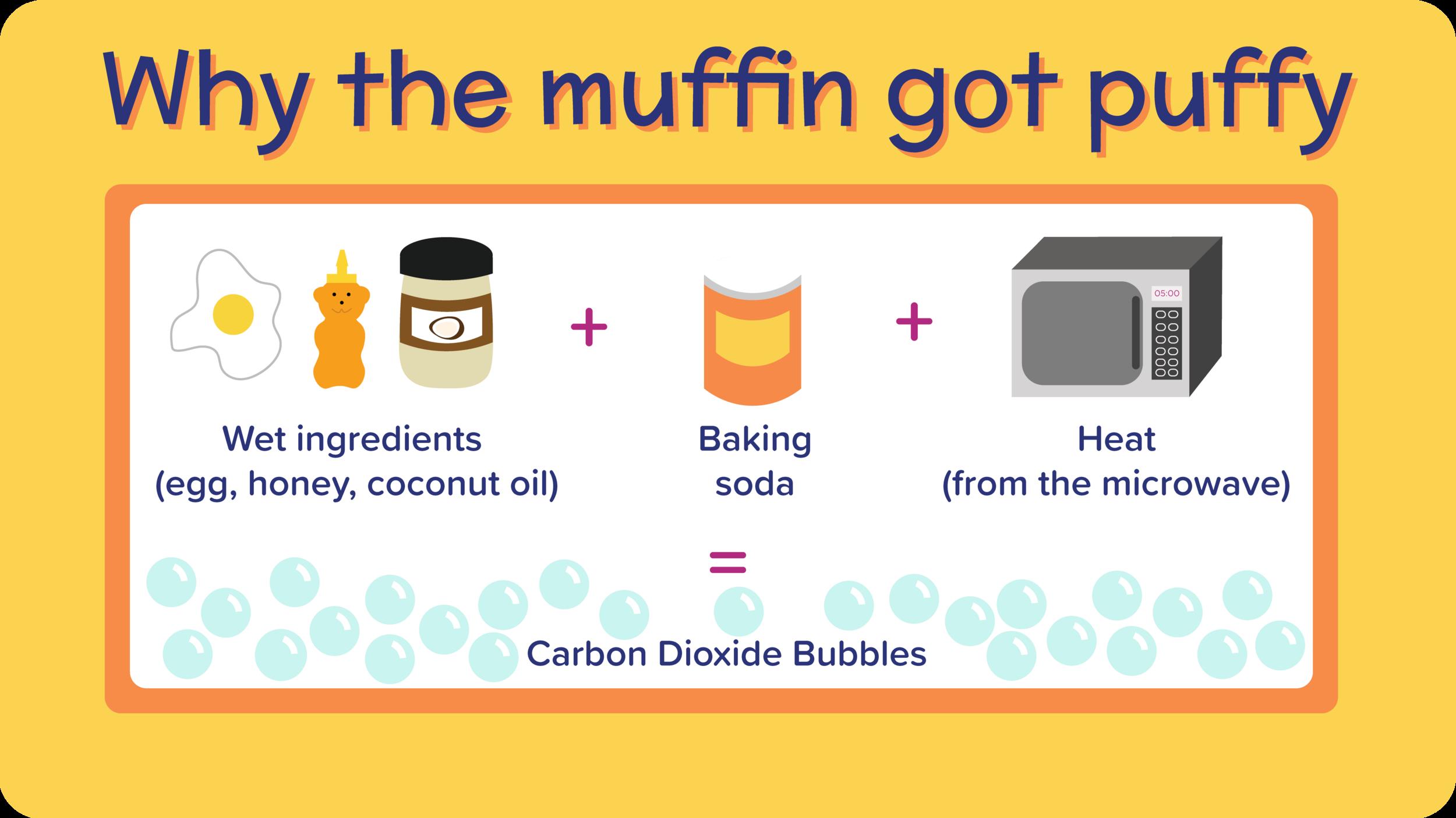 24_BlueberryMugMuffin_why the muffin got puffy-01.png