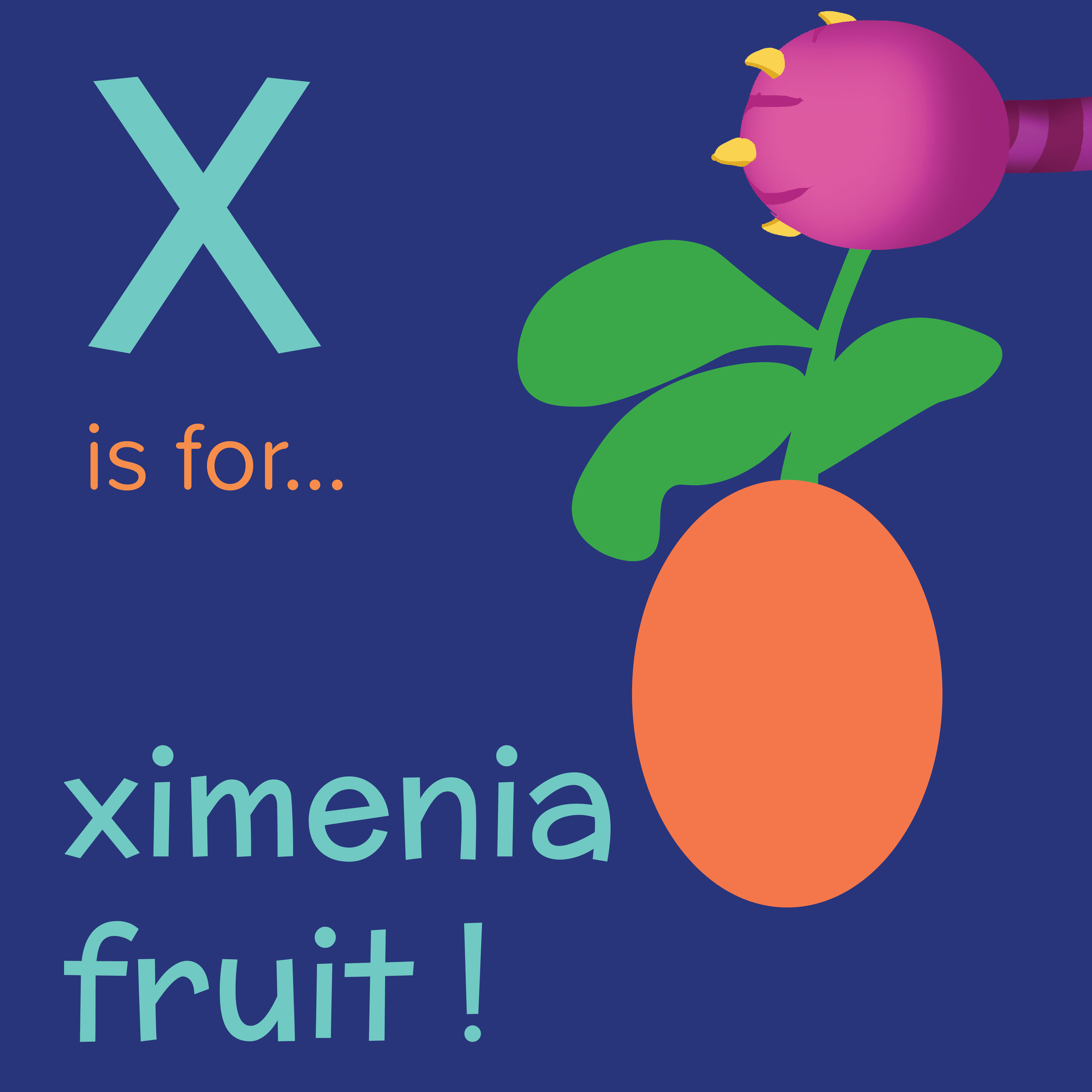 Foods that start with X, X is for ximenia fruit, foods beginning with the letter x, recipes starting with x, recipes a to z