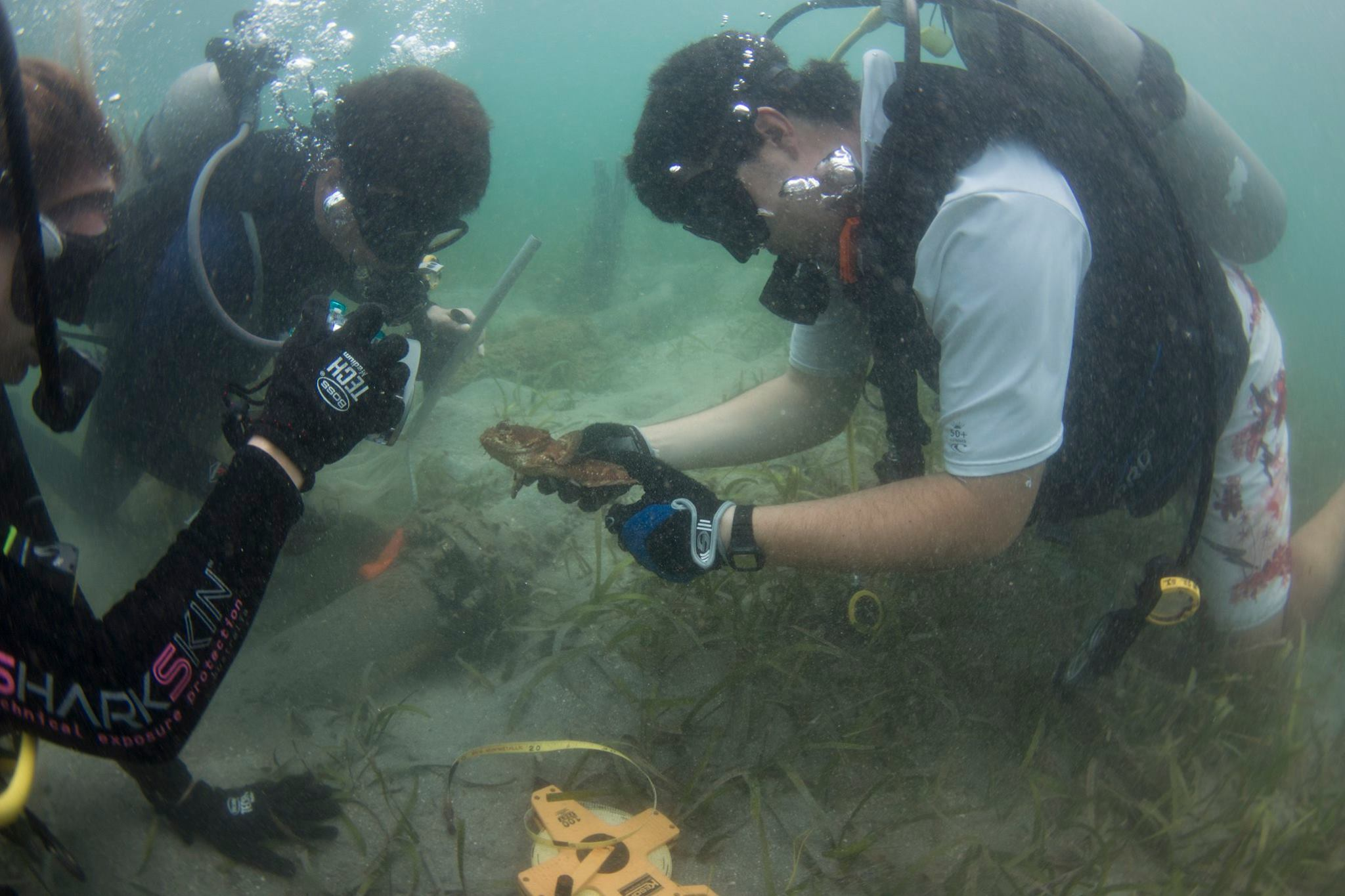Measuring a Toadfish Panama.jpg
