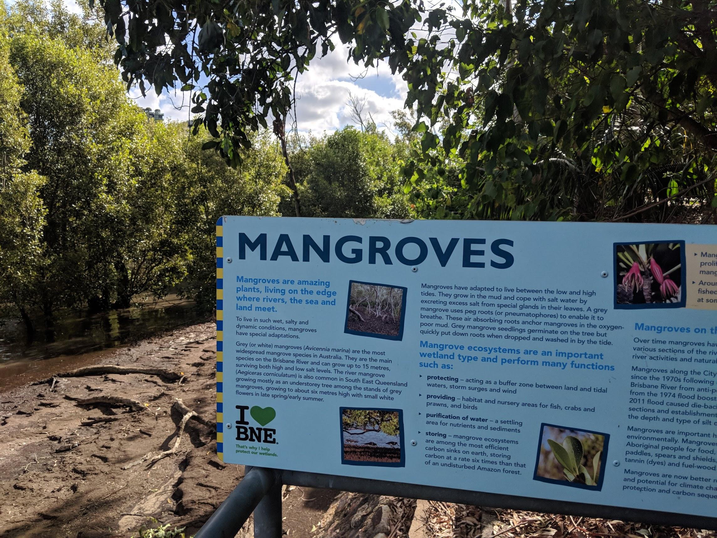 Mangrove Info.jpg