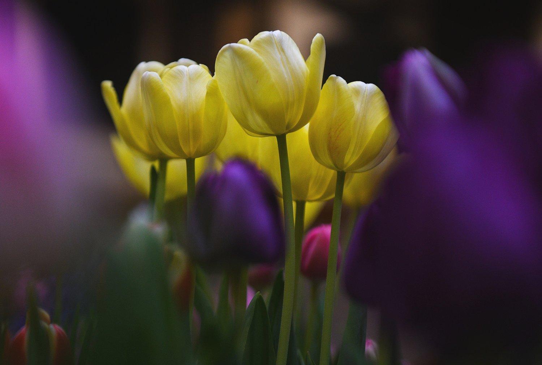 Easter01.jpg