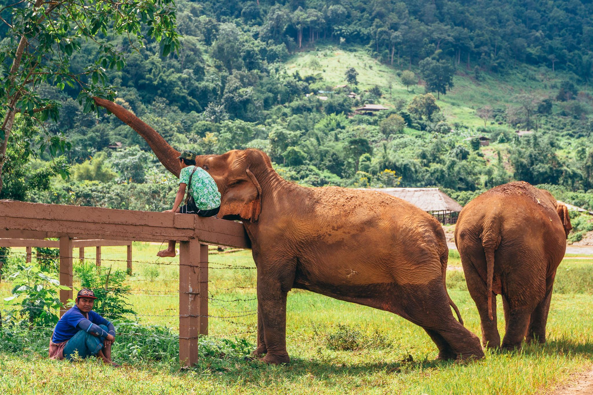 Chiang Mai Elephant Nature Park-13.jpg