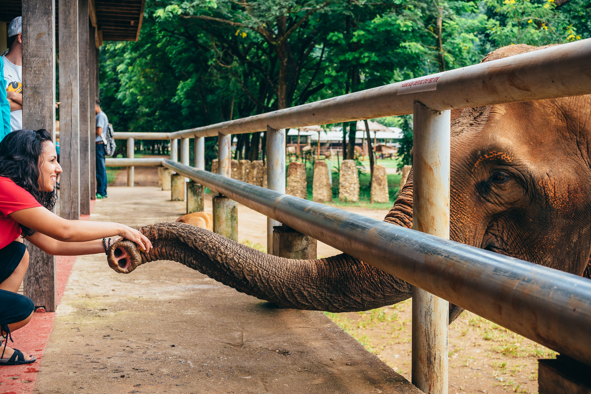 Chiang Mai Elephant Nature Park-1.jpg
