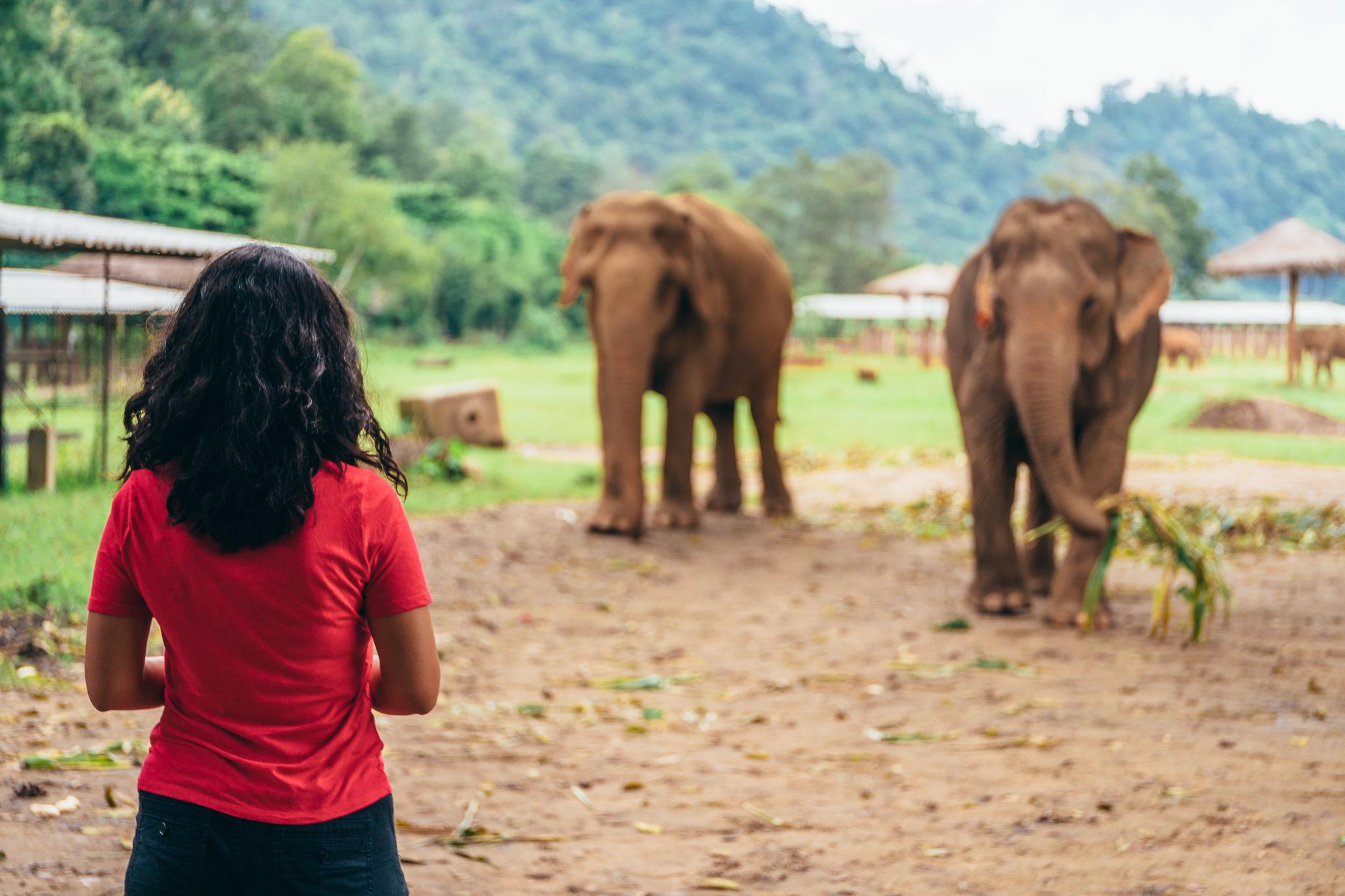 Chiang Mai Elephant Nature Park-6.jpg