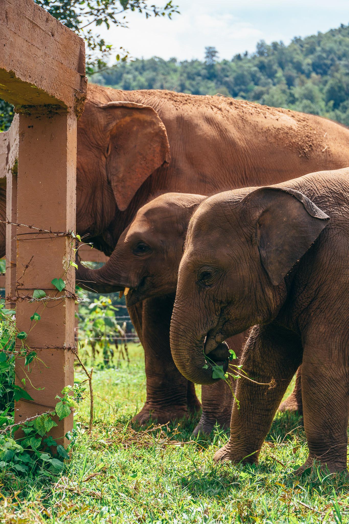 Chiang Mai Elephant Nature Park-12.jpg