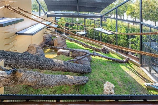 gorilla-exhibit-houston-zoo-march-2015-15.jpg