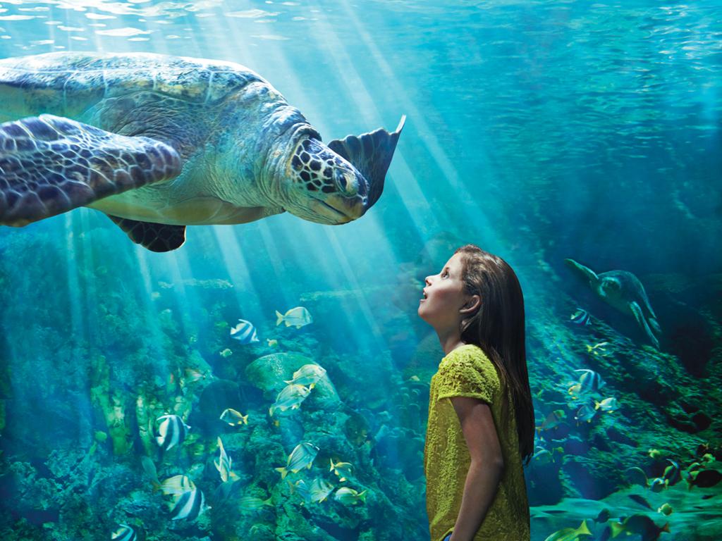 Turtle_Reef.jpg