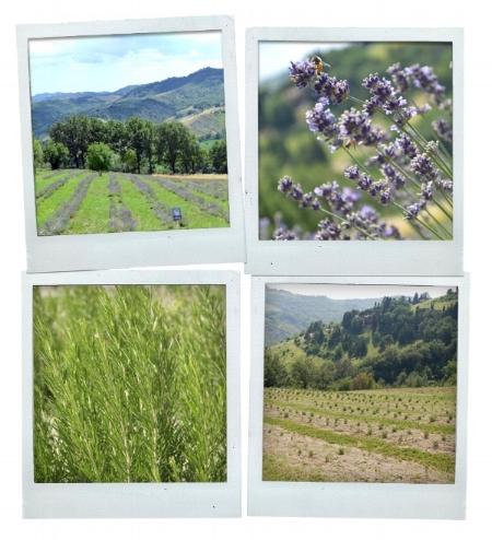Oway's biodynamic farm in Italy