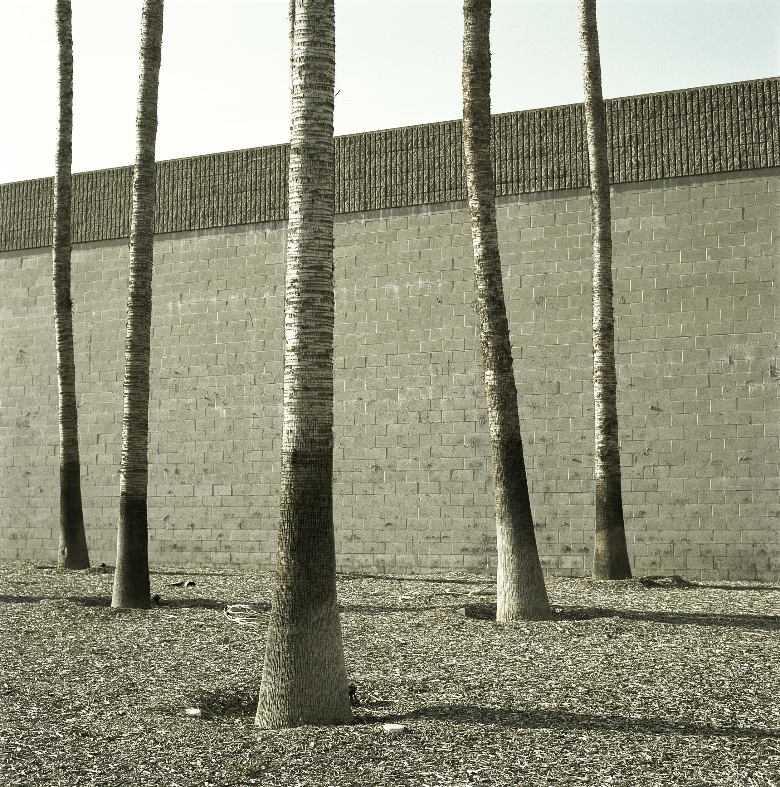5 trunks-long beach1.jpg