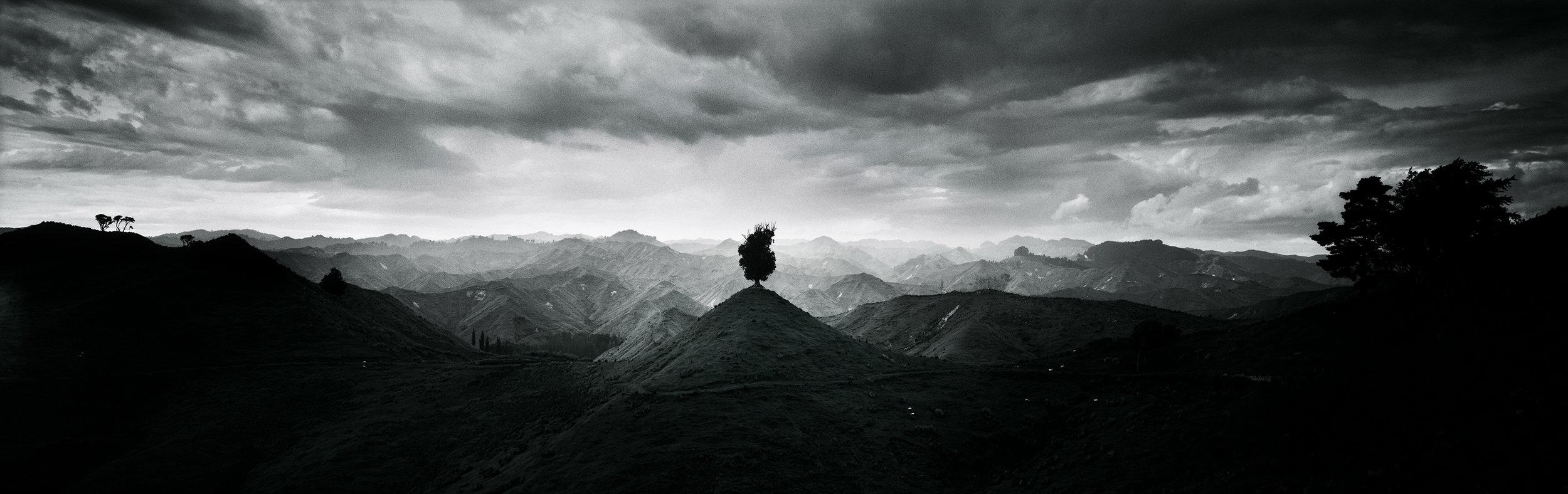 LONE TREE RATAHI.jpg