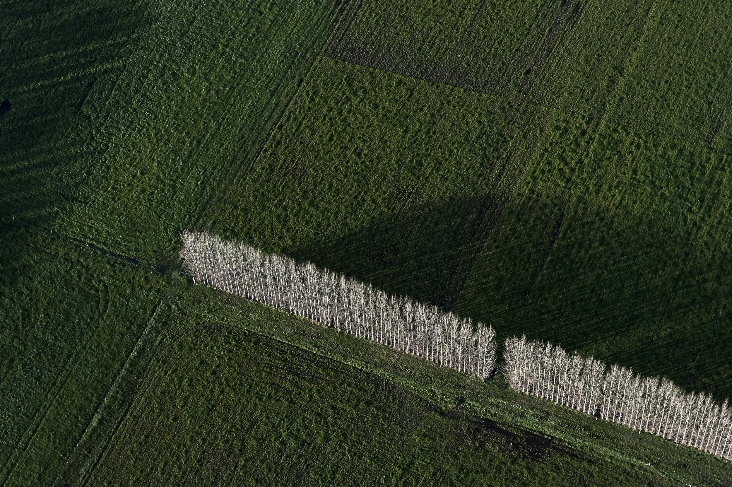 Line in Grass©AG.jpg