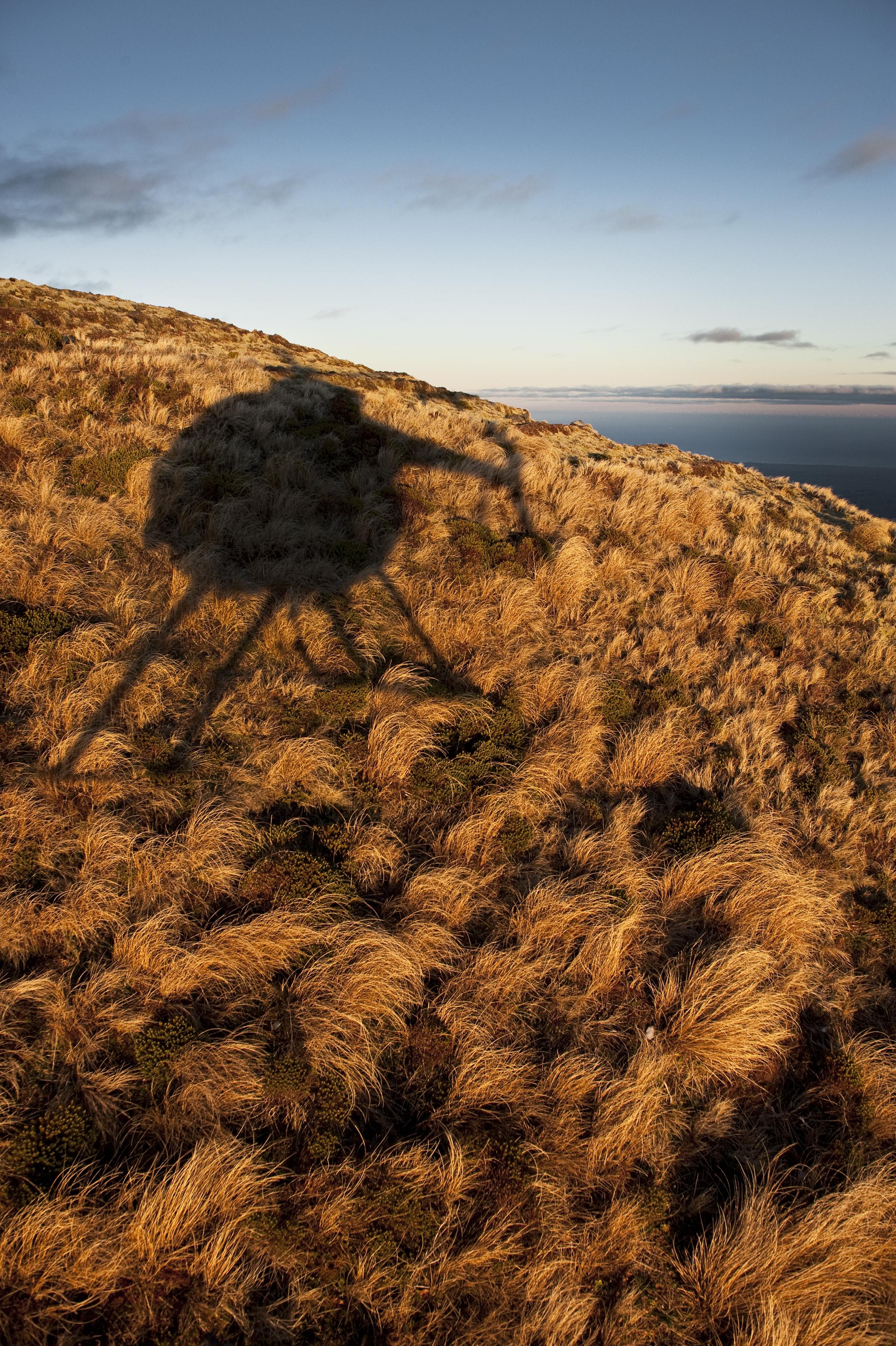 Chopper shadow in tussock©AG.jpg
