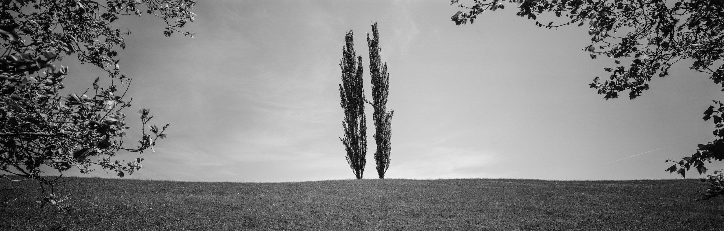 TREES HOLDING HANDS.jpg
