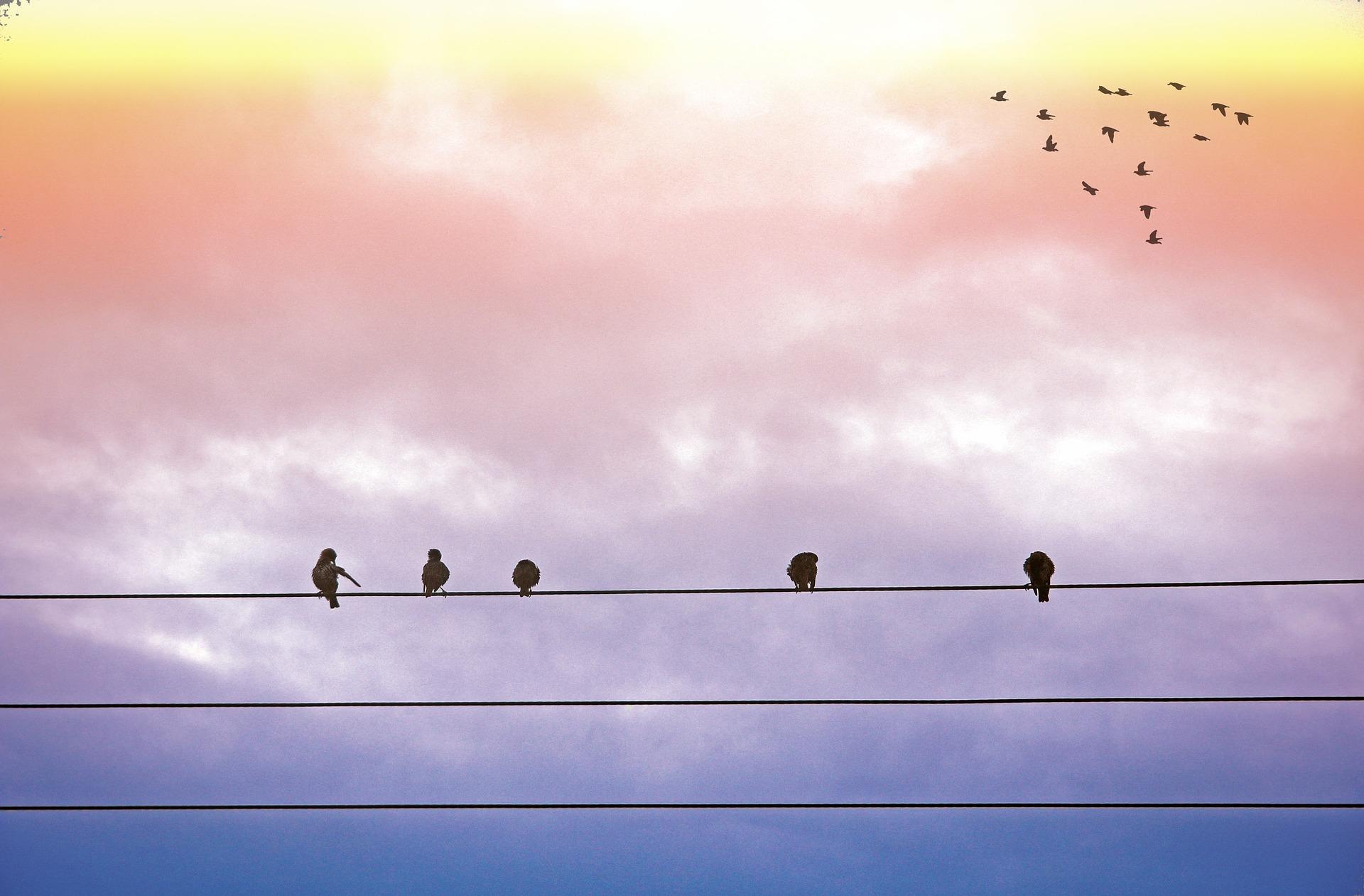 birds-1601101_1920.jpg