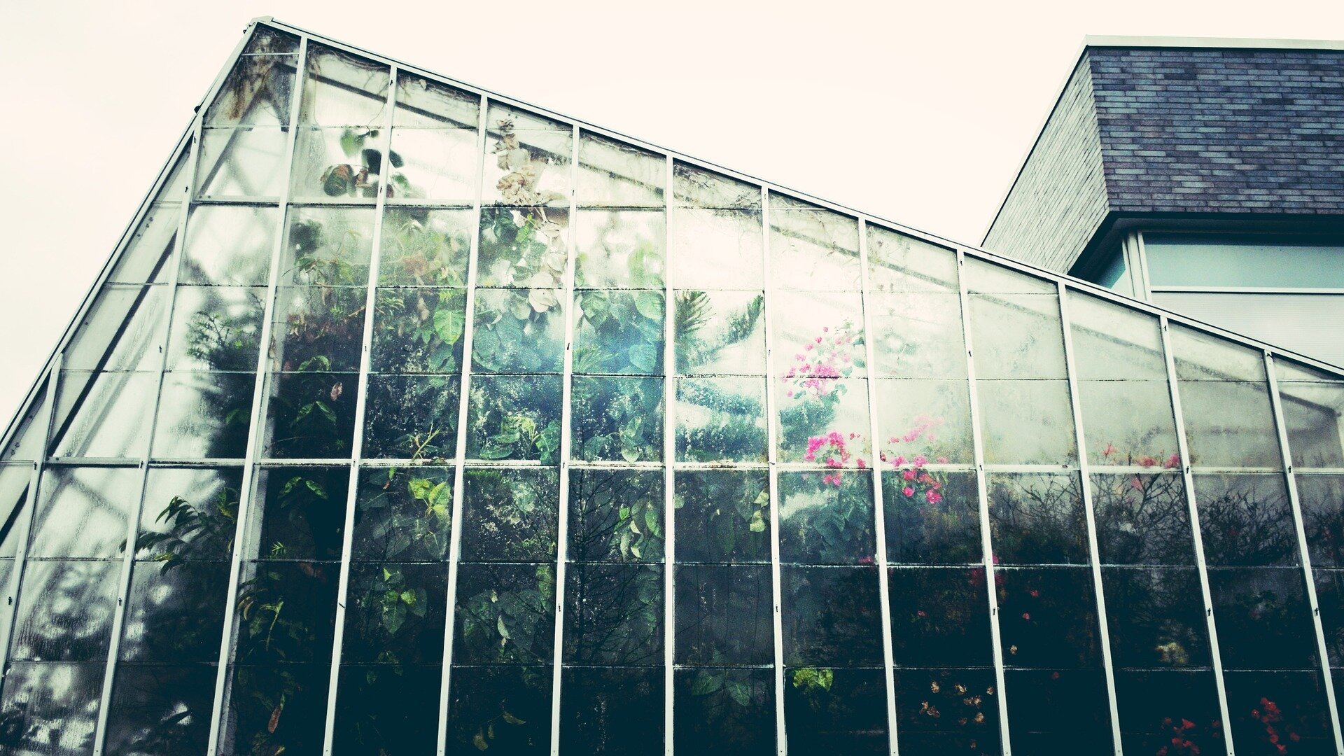 greenhouse-1246536_1920.jpg