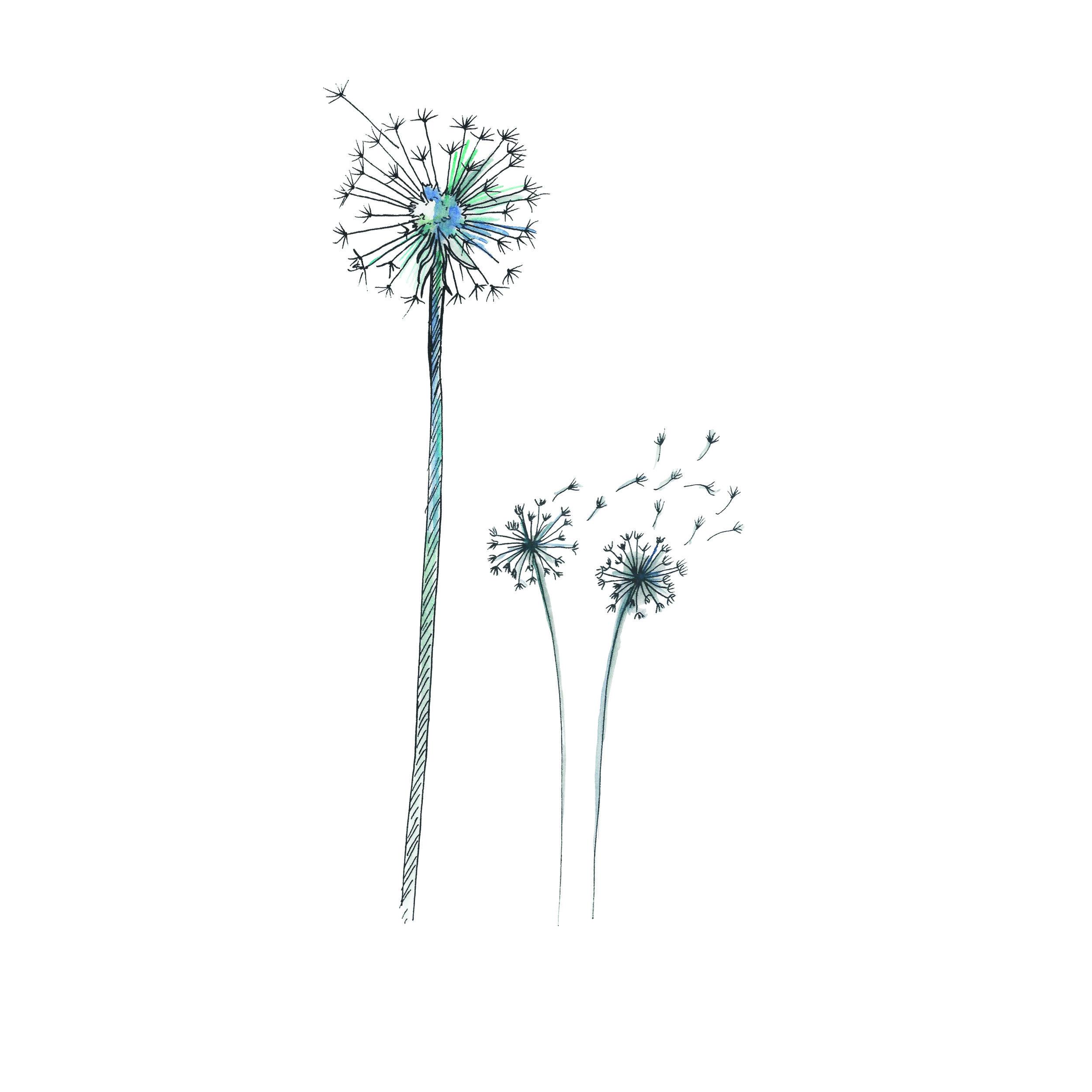 Wish Flowers (Dandelions)