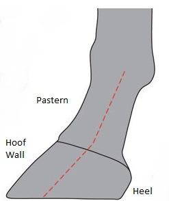 (Fig 3) Forward Foot