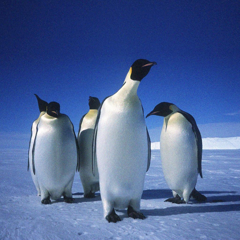 Polar ex 2.jpg