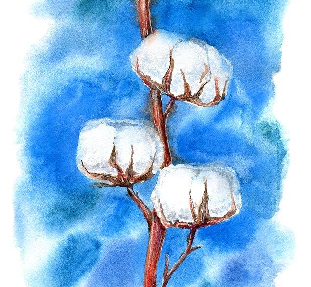 The essence of the Supima cotton plant. Long-staple. Quality. Premium.