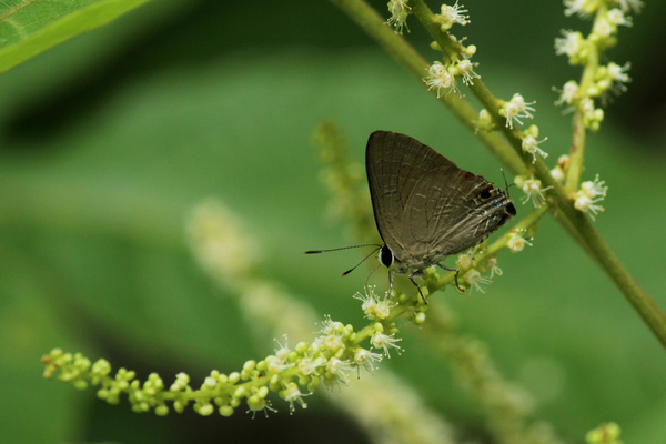 butterly green.jpg