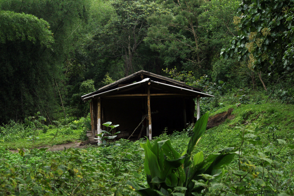 Forest resting hut.JPG