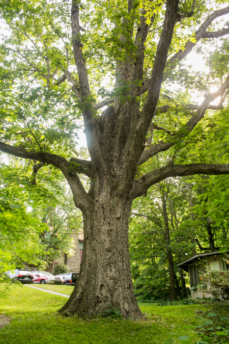 Tree 450x675.jpg