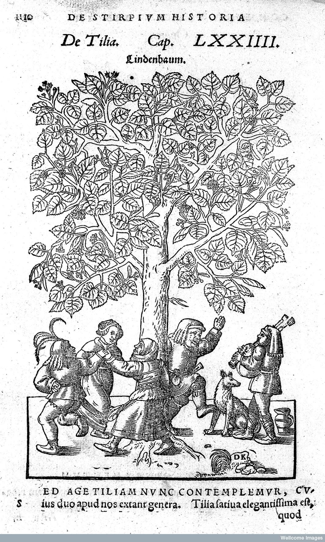 Hieronymus Bock, 1552 Materia Medica  woodcut